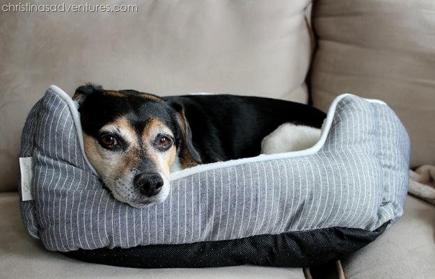 Buckleys New Bed