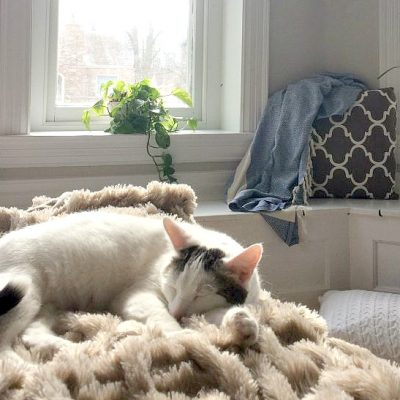 Meet Bailey {what you need to know when you adopt a cat}
