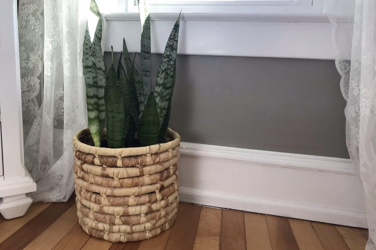 How to put plants in secondhand containers