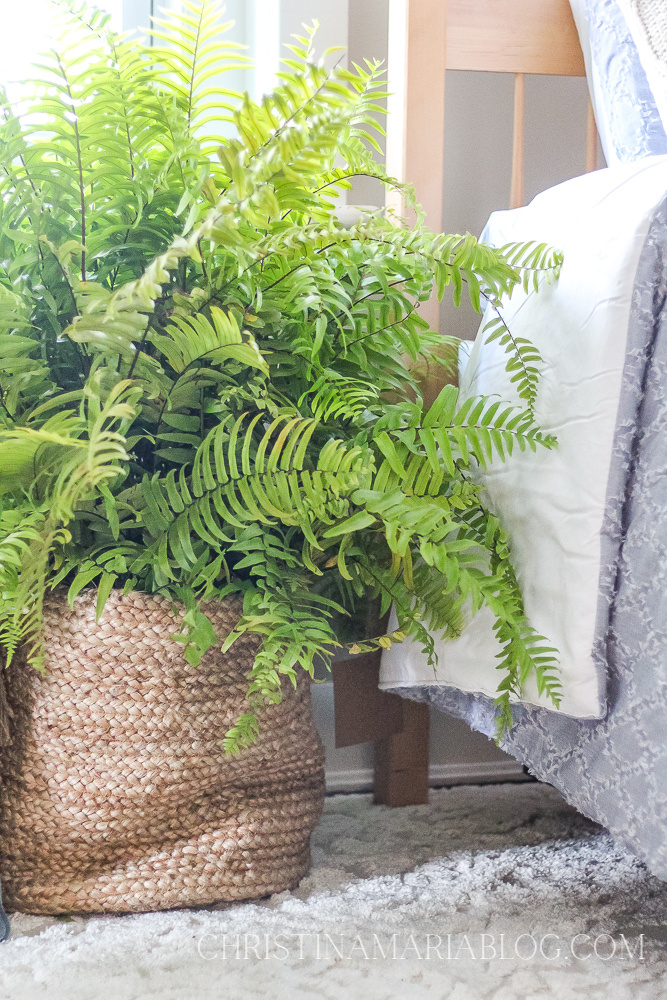 indoor fern in woven basket