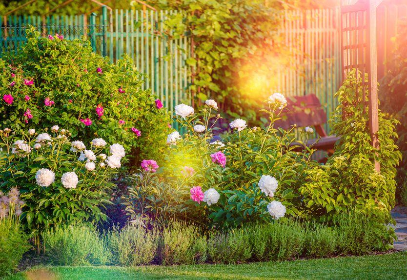 cut flower garden ideas