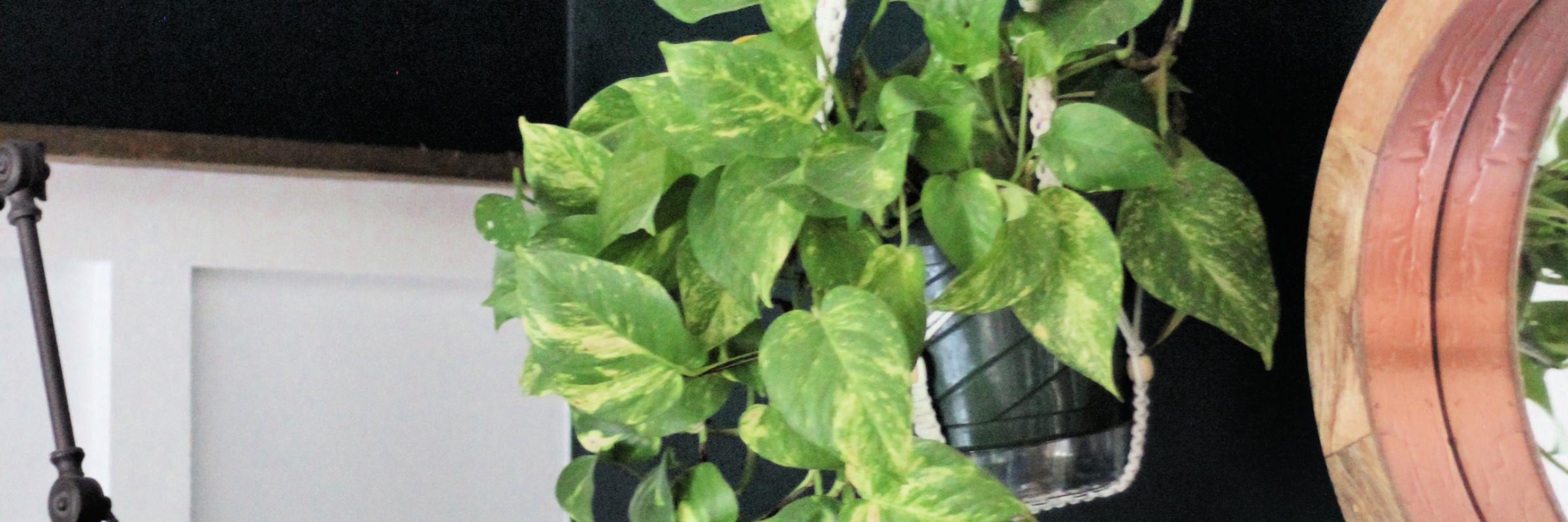 8 easy house plants