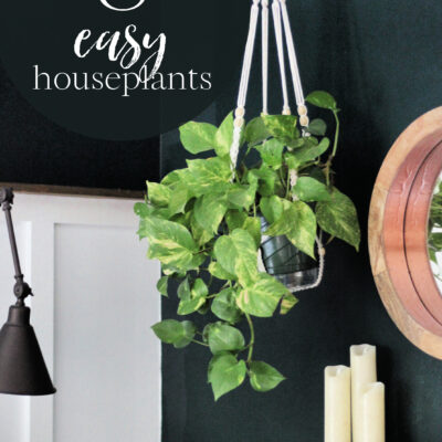 Low maintenance indoor plants : the easy houseplants I own and love