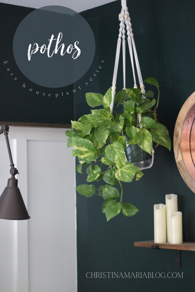 Easy houseplant Pothos hanging from a macrame hanger
